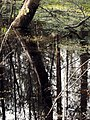 Сестрорецкое болото 1.jpg