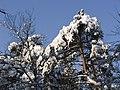 Украина, Киев - Голосеевский лес 173.jpg