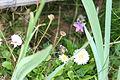 Цветы в подмосковье - panoramio.jpg