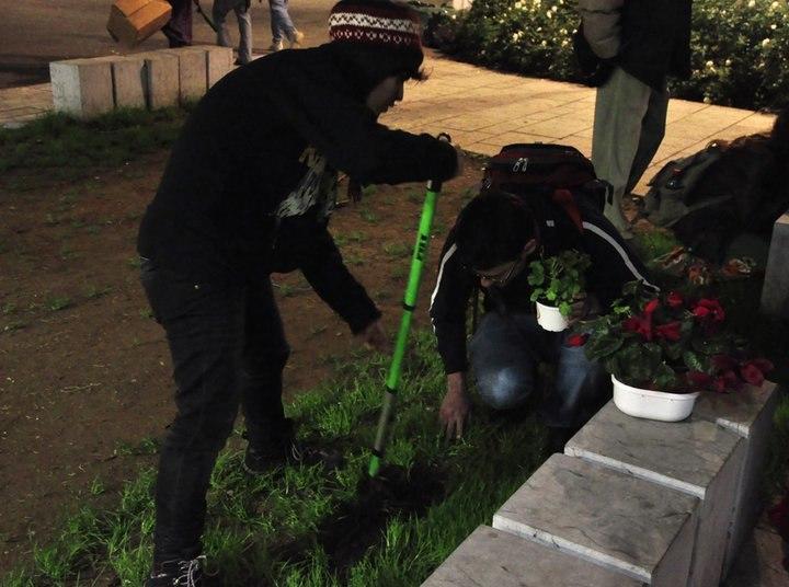 גינון גרילה חיפה 2011 02 14
