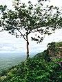 ผามออีแดง อุทยานแห่งชาติเขาพระวิหาร. (อุทยานอันดับที่ 83).jpg