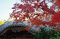 延命寺にて 河内長野市神ガ丘 2014.11.27 - panoramio.jpg