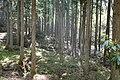 湯袋峠から筑波山の林道 - panoramio.jpg