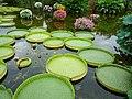 琵琶湖水生植物公園 - panoramio.jpg