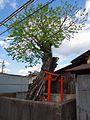 白密神社 五條市宇野町 2013.5.02 - panoramio.jpg
