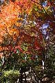 百草台自然公園 - panoramio.jpg