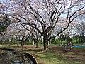 稲田公園 - panoramio.jpg