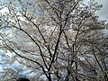 花緑公園 - panoramio - YOSHIFUMI OGISO.jpg