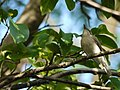 ... bird (4745866624).jpg