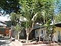 0151jfBinalonan Pangasinan Province Roads Highway Schools Landmarksfvf 03.JPG
