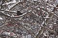 13-02-09 Nemo Snowstorm (Unedited) (89) (8467249876).jpg