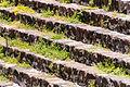 15-07-13-Teotihuacan-RalfR-WMA 0187.jpg