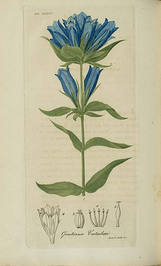 Annin & Smith - Image: 1818 34 American Medical Botany engr by Annin and Smith 3542741517