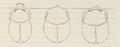 1839 Samuel George Morton Crania Americana 3 Skulls.png