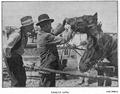 1910 Târg de vite II.PNG
