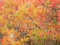 2008-10-19-niederfinow-15.jpg
