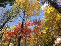 2014-10-30 12 44 56 Trees during autumn in the woodlands along the West Branch Shabakunk Creek in Ewing, New Jersey.JPG
