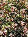 2015-05-27 Paris, Jardin des plantes 14.jpg