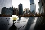 2016-11 Flower at the September 11 Memorial.jpg
