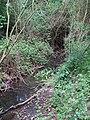 2018-05-10 Stream alongside a Woodland footpath, Hanworth) (2).JPG