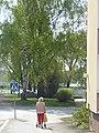 2019-05-22 Oulujoki 12.jpg