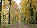 29 - Haute Forêt d'Eu, route de Soreng.JPG