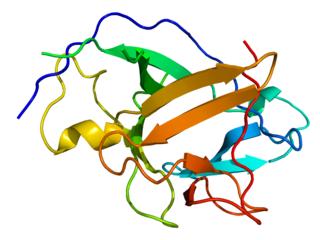 citochina secreta da vari tipi di cellule del sistema immunitario tra cui macrofagi, monociti e cellule dendritiche,