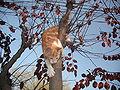 30 6 10 red tabby cat 36.jpg