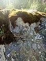 35-211-5004 Казавчинські скелі Лютинська 23.jpg