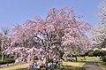 3 Chome Shimoyugi, Hachiōji-shi, Tōkyō-to 192-0372, Japan - panoramio.jpg