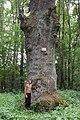 400-річний дуб на болоті близ с.Міньковці.jpg