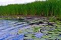4012-4. Novokhopyorsk. Savala River.jpg