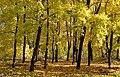 5 Осінь в Гідропарку.jpg