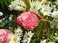 6272Flowers of the Philippines 08.jpg
