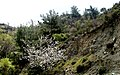 A@a askas village cyprus - panoramio (2).jpg