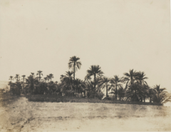 ALBUM OF EGYPT AND ALGERIA, 5.PNG