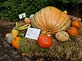 A 1397-lbs pumpkin in NYBG.jpg