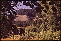 A CLEAR-CUT AND BURNED-OVER HILLSIDE. ONE MILE FROM THE ENTRANCE TO THE HOH RAIN FOREST - NARA - 545283.jpg