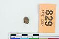 A fragment of silver pressblech foil from a helmet (FindID 555751).jpg