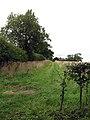 A grassy field margin - geograph.org.uk - 950120.jpg