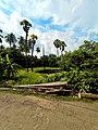 A natural view of rural Bengal, Jagadishpur Hat, Howrah, West Bengal.jpg