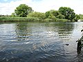 A quiet day on the River Yare - geograph.org.uk - 1387397.jpg