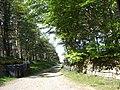 Access to Deskryshiel Lodge - geograph.org.uk - 445363.jpg