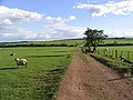 Access track - geograph.org.uk - 427602.jpg