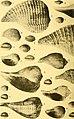 Actes de la Société linnéenne de Bordeaux (1923) (16772409195).jpg