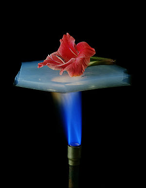 Aerogel - A flower is on a piece of aerogel which is suspended over a flame from a Bunsen burner. Aerogel has excellent insulating properties, and the flower is protected from the flame.