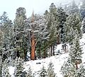 After the Storm, Yosemite High Country 5-20-15 (18590789839).jpg