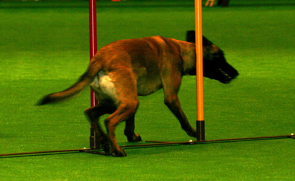 Build Dog Agility Course At Home