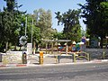 Akiva Gur Garden (3).JPG