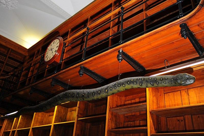 File:Albert the Anaconda (6149642731).jpg